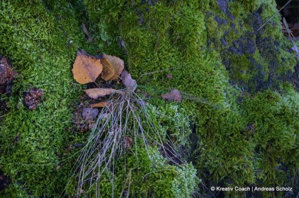 Blätter im Moos
